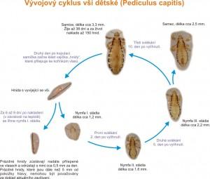ves_cyklus